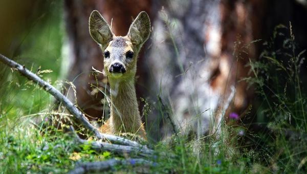 Riforma Legge Aree Protette: WWF, riaprire confronto con fronte Associazioni per salvare Parchi