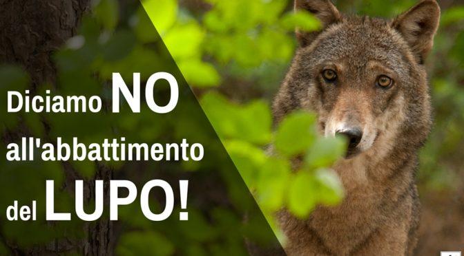 Piano Lupo: WWF scrive a ministero Ambiente e Regioni