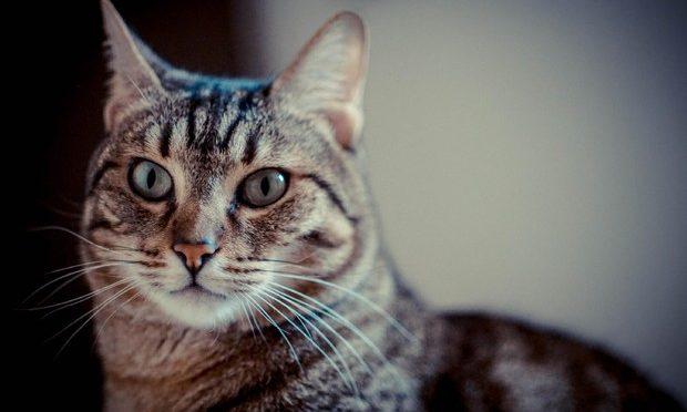 Condannato a Bergamo 'serial killer dei gatti', 3 anni e 6 mesi