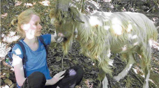 Salvare animali a tu per tu coi pastori