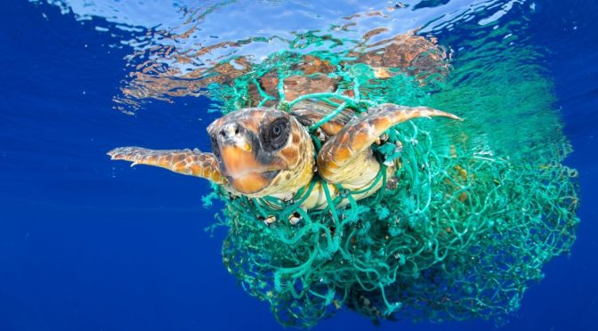 PLASTICA: WWF, MEDITERRANEO IN 'TRAPPOLA'  UN MARE PICCOLO E SEMI-CHIUSO  CON IL 7% DELLA MICROPLASTICA DISPERSA NEI MARI DEL MONDO