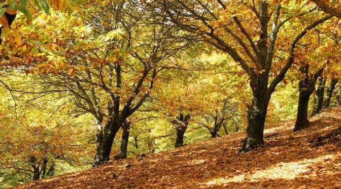Danni ai boschi: in campo tecnici e ricercatori.