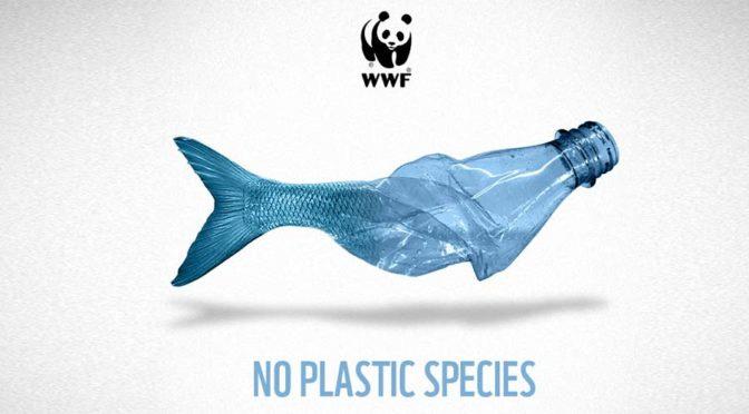 Nuove specie compaiono in mare, ma non è una buona notizia
